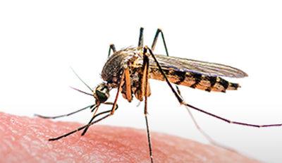 Dia Mundial de Combate à Malária